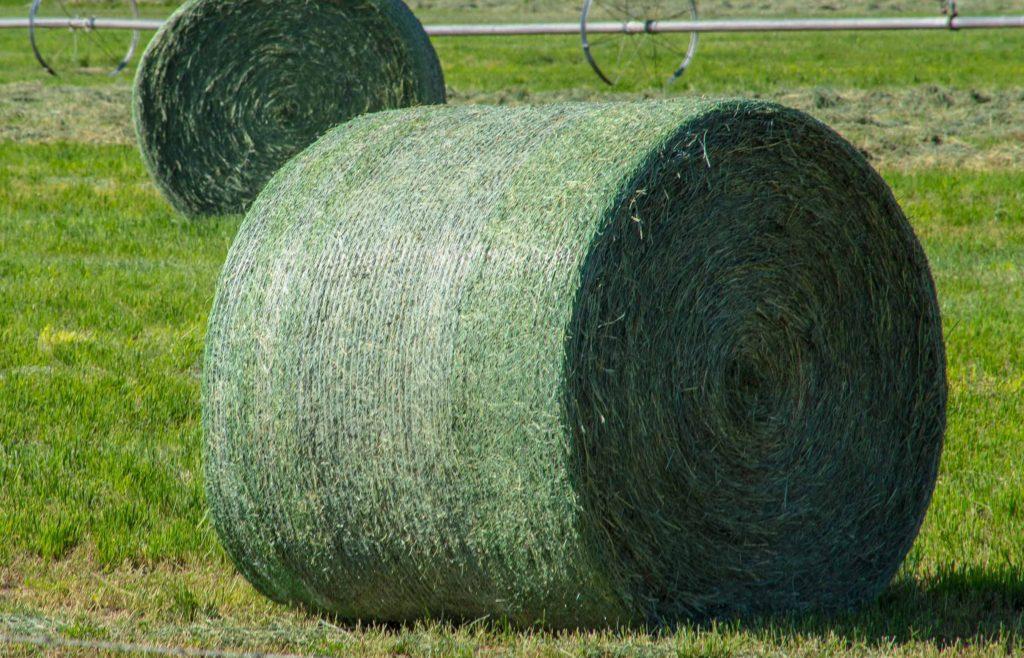 Farmy-Alfalfa-Rolls-Detail-102efw