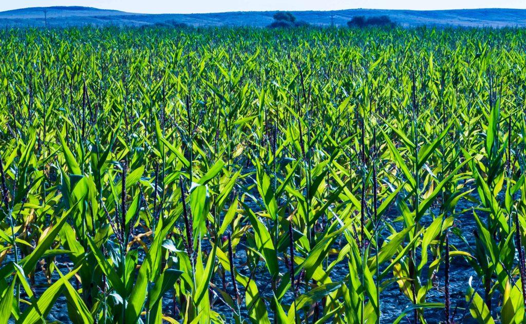 Farmy-Camas-Field-98efw