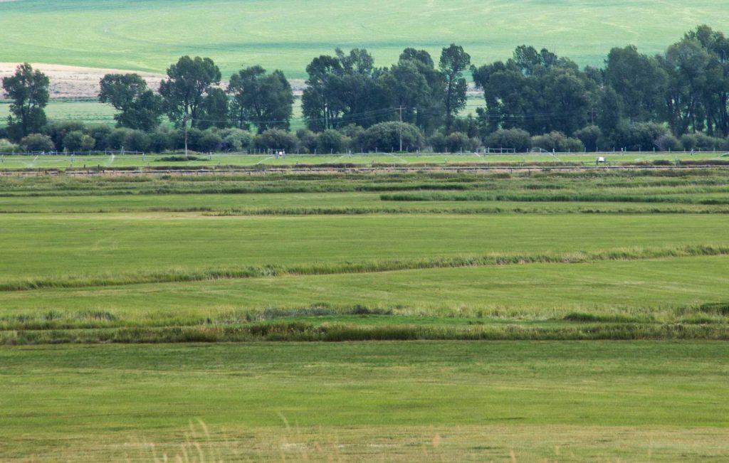 Farmy-Green-Field-1-104efw