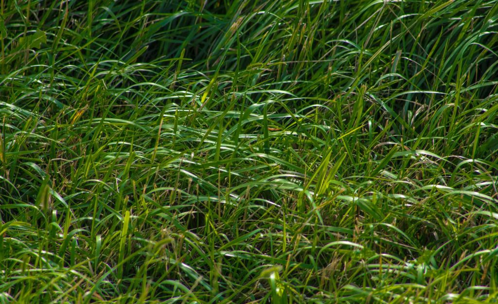 Farmy-Long-Grass-1efw
